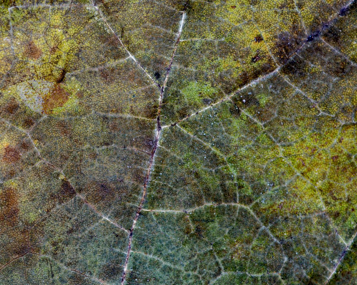 leavesandrosesLR.jpg