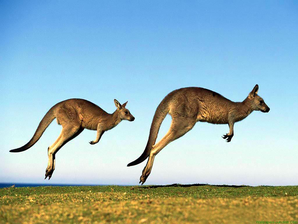 Who knew the Kangaroos would be joined by a unicorn?