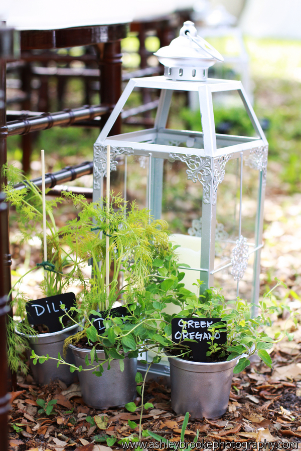 Silver lanterns and potted herbs lined the aisle, and were later used on tables and sent home with guests