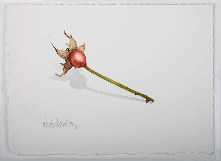 """Rose Hip , 2013 Watercolor on paper, 5"""" x 7""""  Available"""