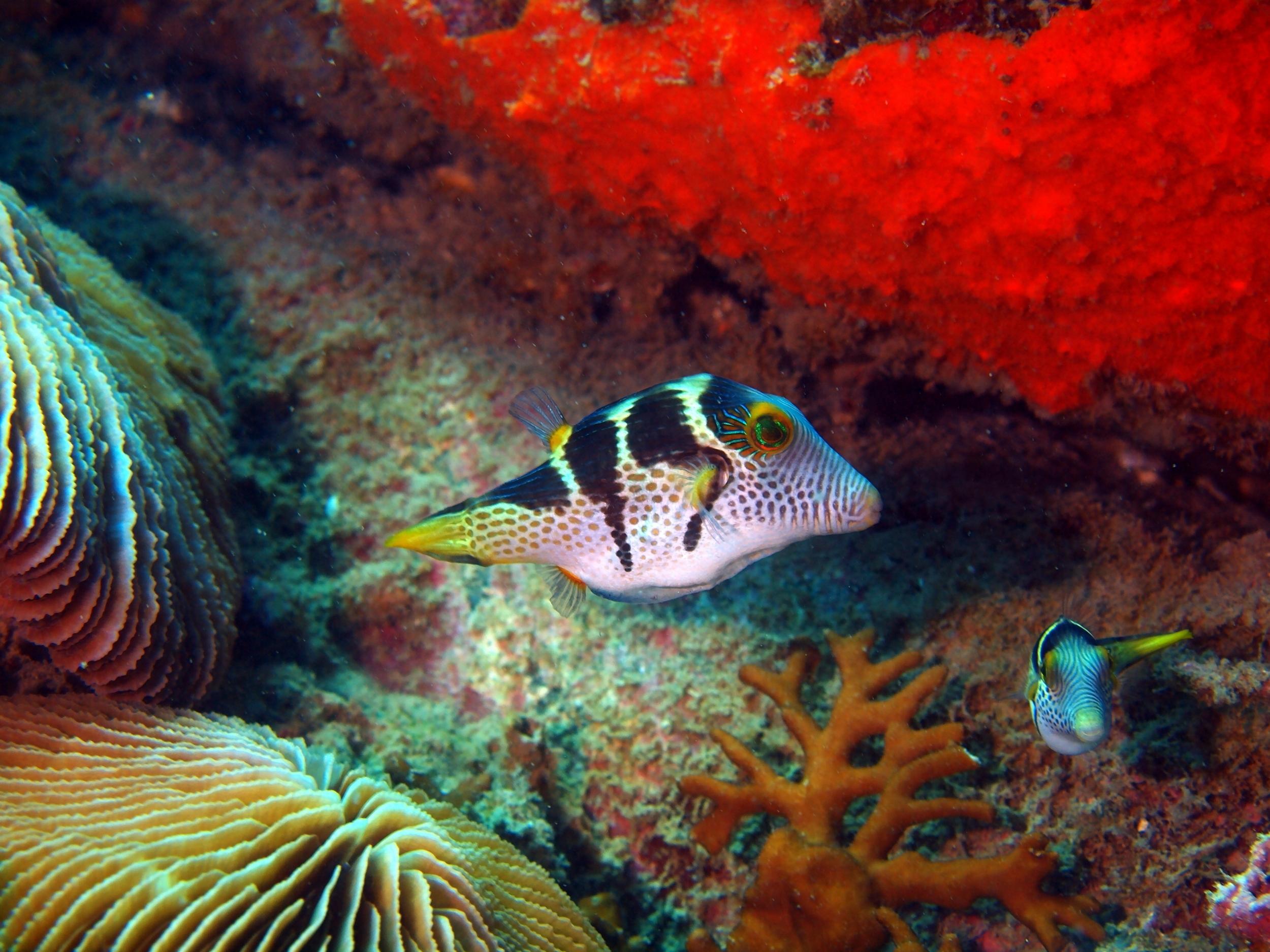 Box Fish - Vietnam Nha Trang