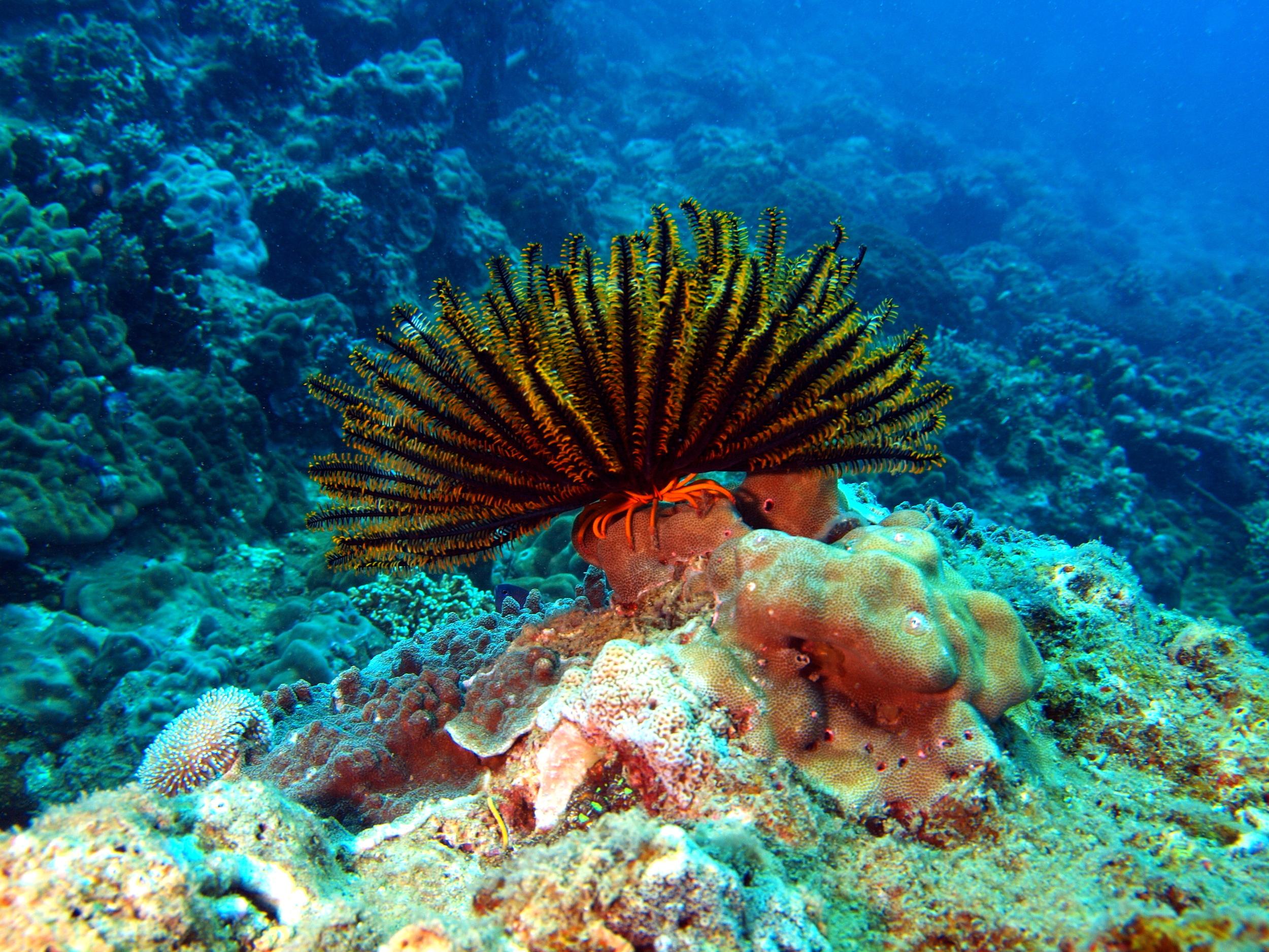 Sea Lily Nha Trang