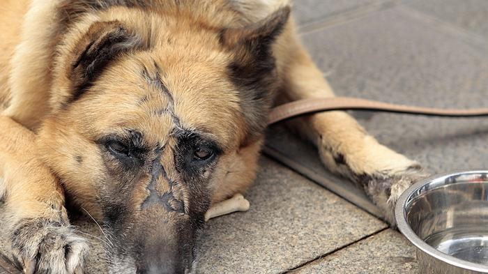 the-fbi-is-now-keeping-track-of-animal-abuse-the-same-way-as-other-top-tier-felonies-1452192117.jpg