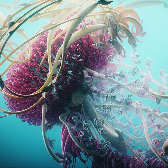 Waratah | Vivid Character Study  Last one of these - incredible experience to have had the opportunity to create these. Tremendous amounts of gratitude to the team and creatives who were in the journey and supported in their creation.  #vividsydney #motiondesign #c4d #animation #flora #characterdesign