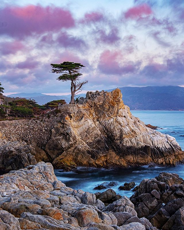 The Lone Cypress, probably the most photographed tree in the world.  If you are in the area 17 mile drive is a must do! ⛳️🏌️♂️🌲 #mypebblebeach #17miledrive#lonecypress #pebblebeach #myfujifilm #fujifilm_northamerica #xt2 #fujixt2 #centralcoast#explorecalifornia #instapassport #instatravel#landscape #landscapephotography #monterey#pacificocean #roadtrip #scenic#scenicphotography #seemonterey #travelcalifornia#travelgram #travelmore #travelphotography#visitca #visitcalifornia #westcoast #welltraveled