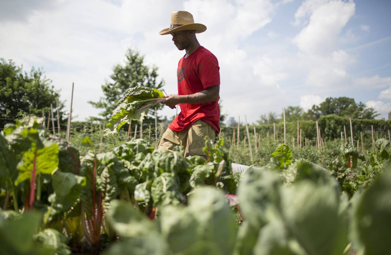 George Valentine, 49 years old, works on an urban farm and takes cooking classes on Wards Island as part of a program coordinated by Project EATS and the homelessness nonprofit HELP USA.    PHOTO:BESS ADLER FOR THE WALL STREET JOURNAL