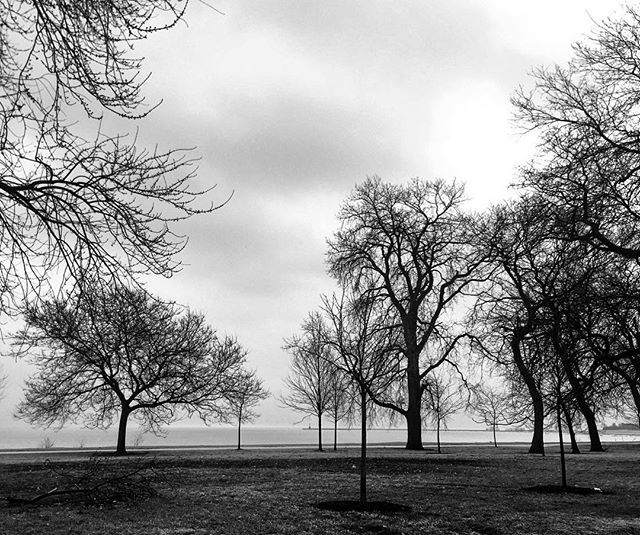 #chicago #lakemichigan #park #chicago_community #insta_chicago #tree_captures #tree_magic #trees