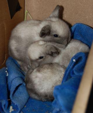 pile of bunnies.JPG