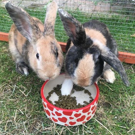 @thor_and_loki_bunnies