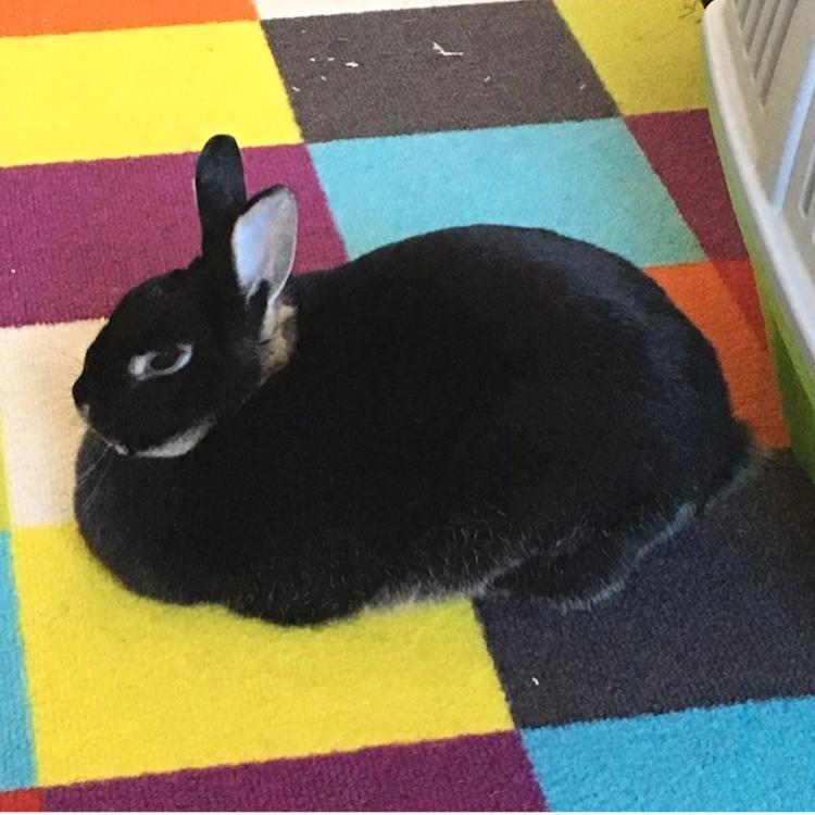 @fie_the_bunny