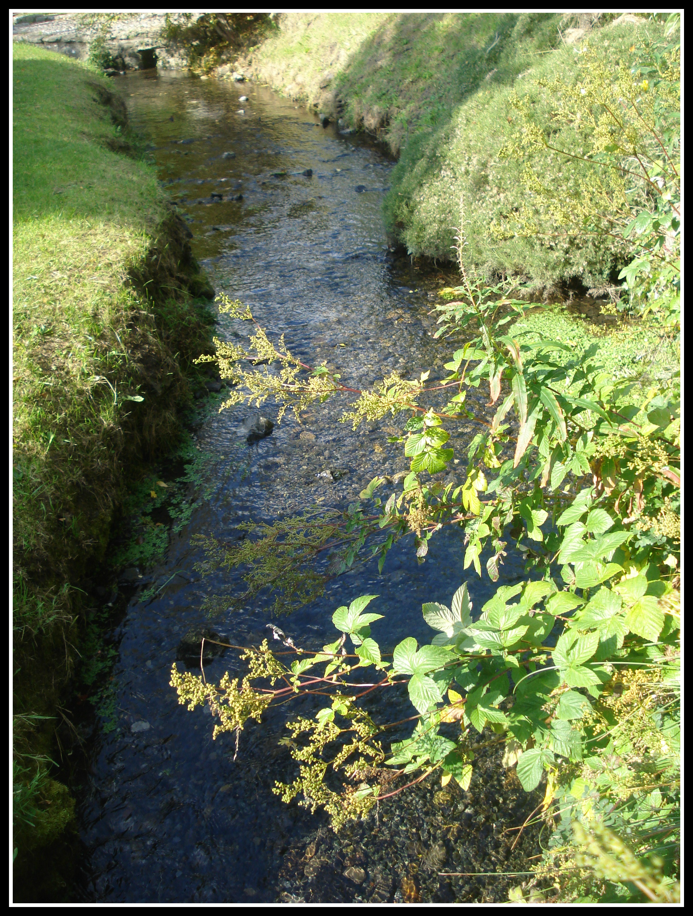 A stream at St. Brigid's Well.