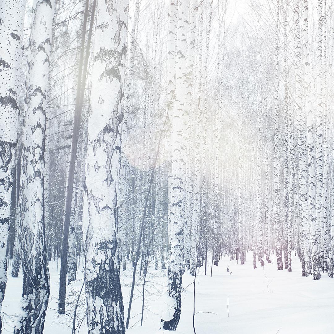Disappear_Retreat_Winter_Birch_Forest.jpg