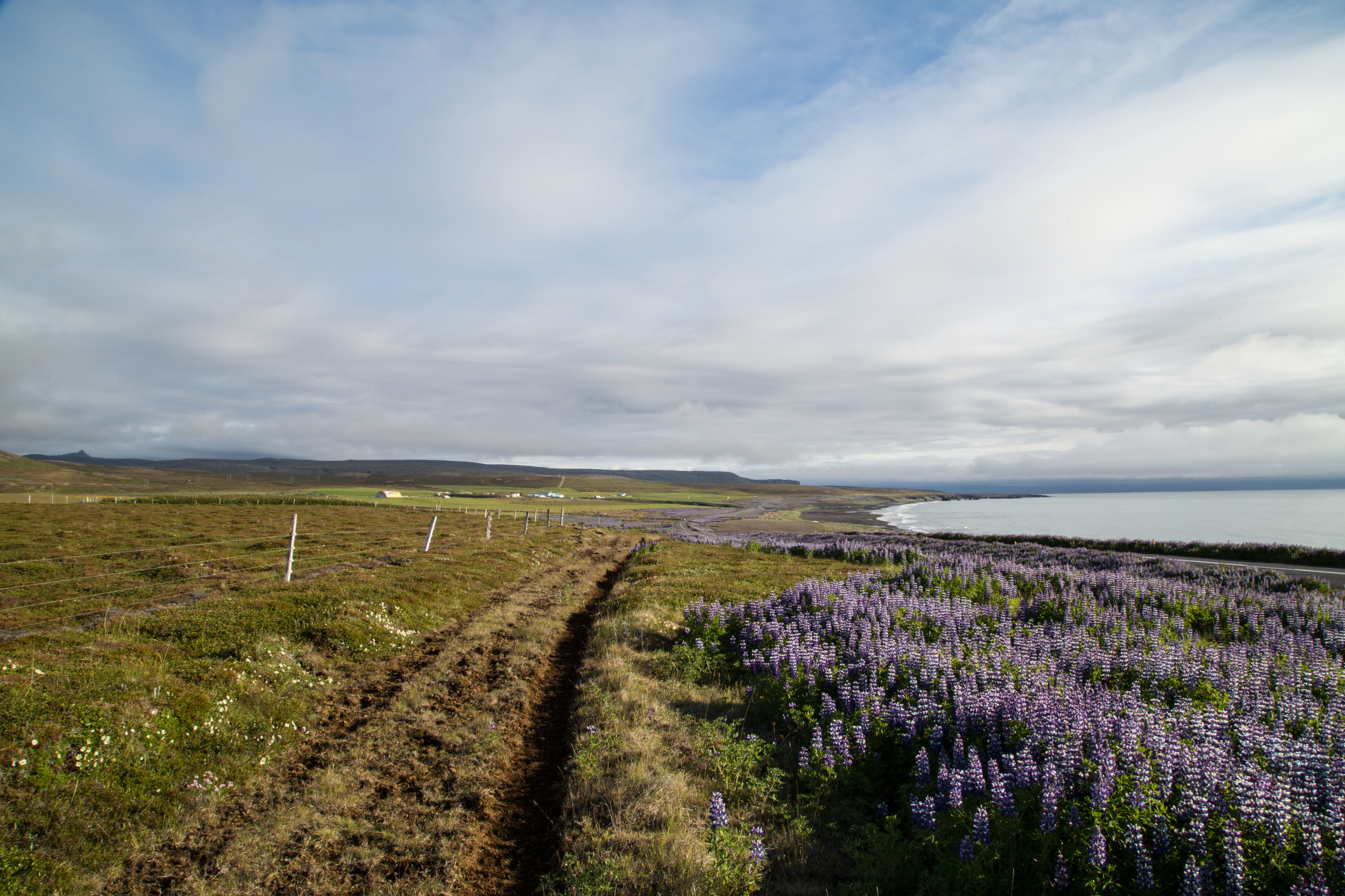"""Along with the sunshine came a dramitic change in scenery. Beautiful coastal views and meadows of purple flowers ran along the trail."""