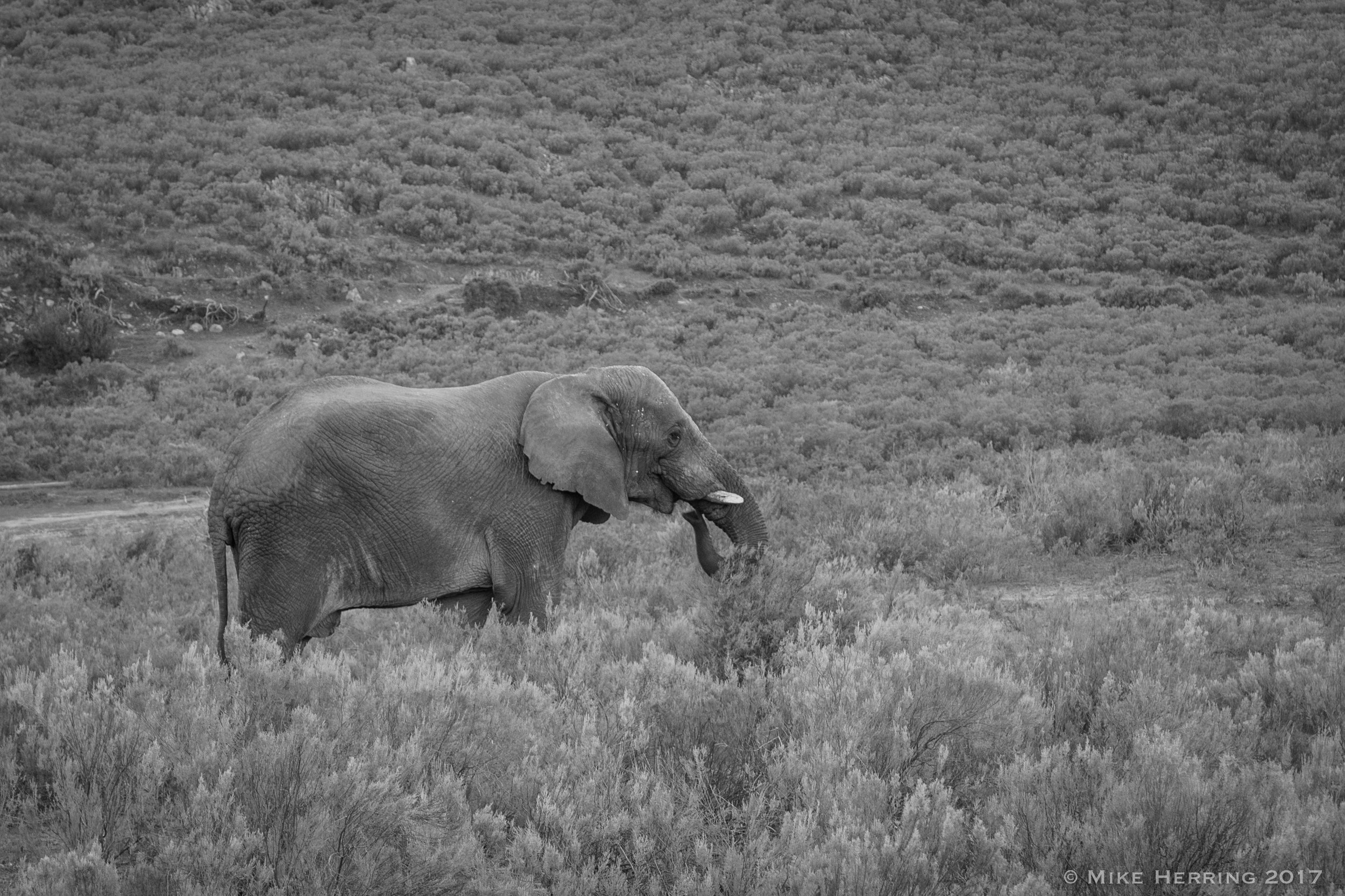 South Africa-8190.jpg