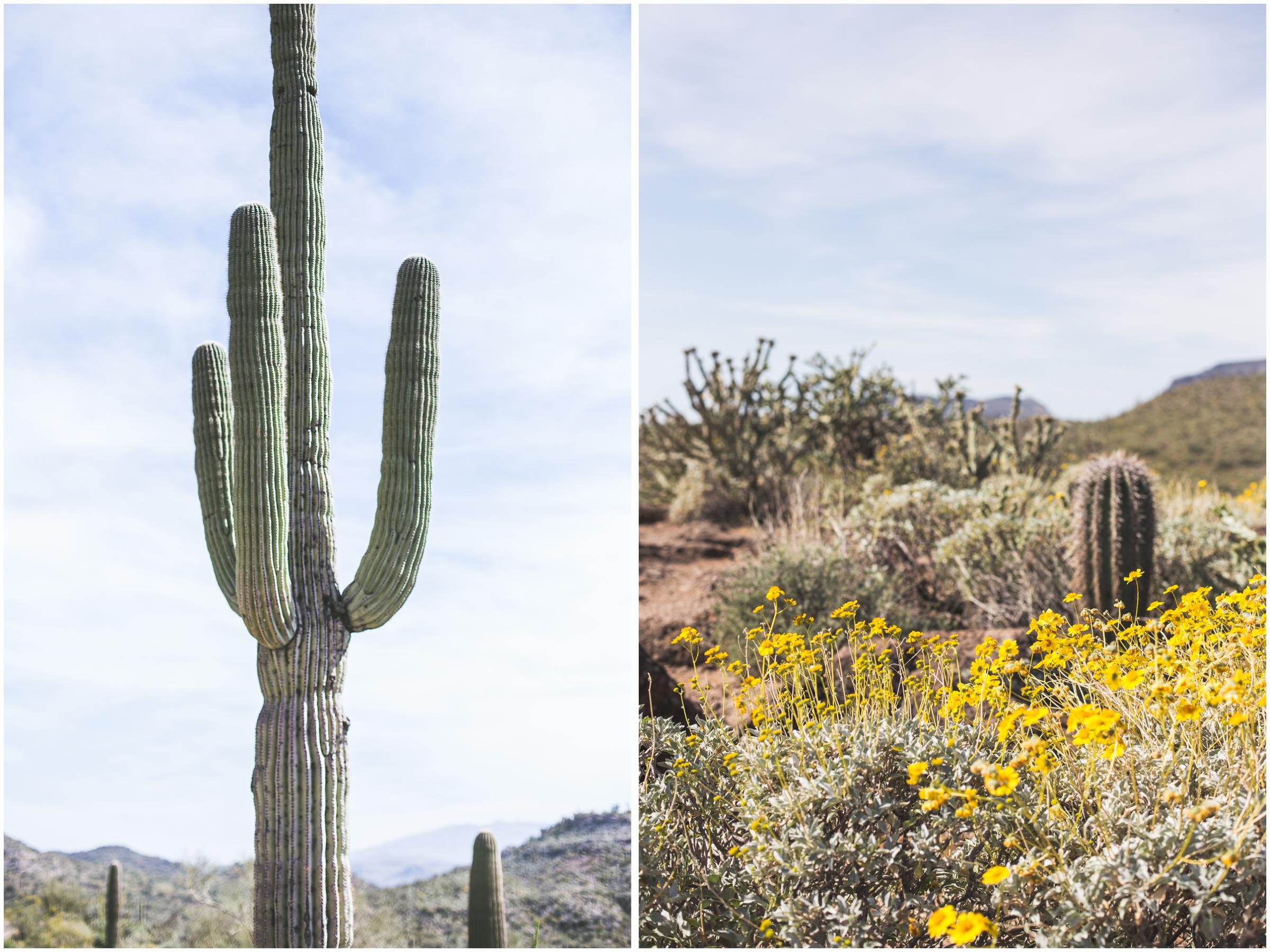 cactiandflowers2.jpg