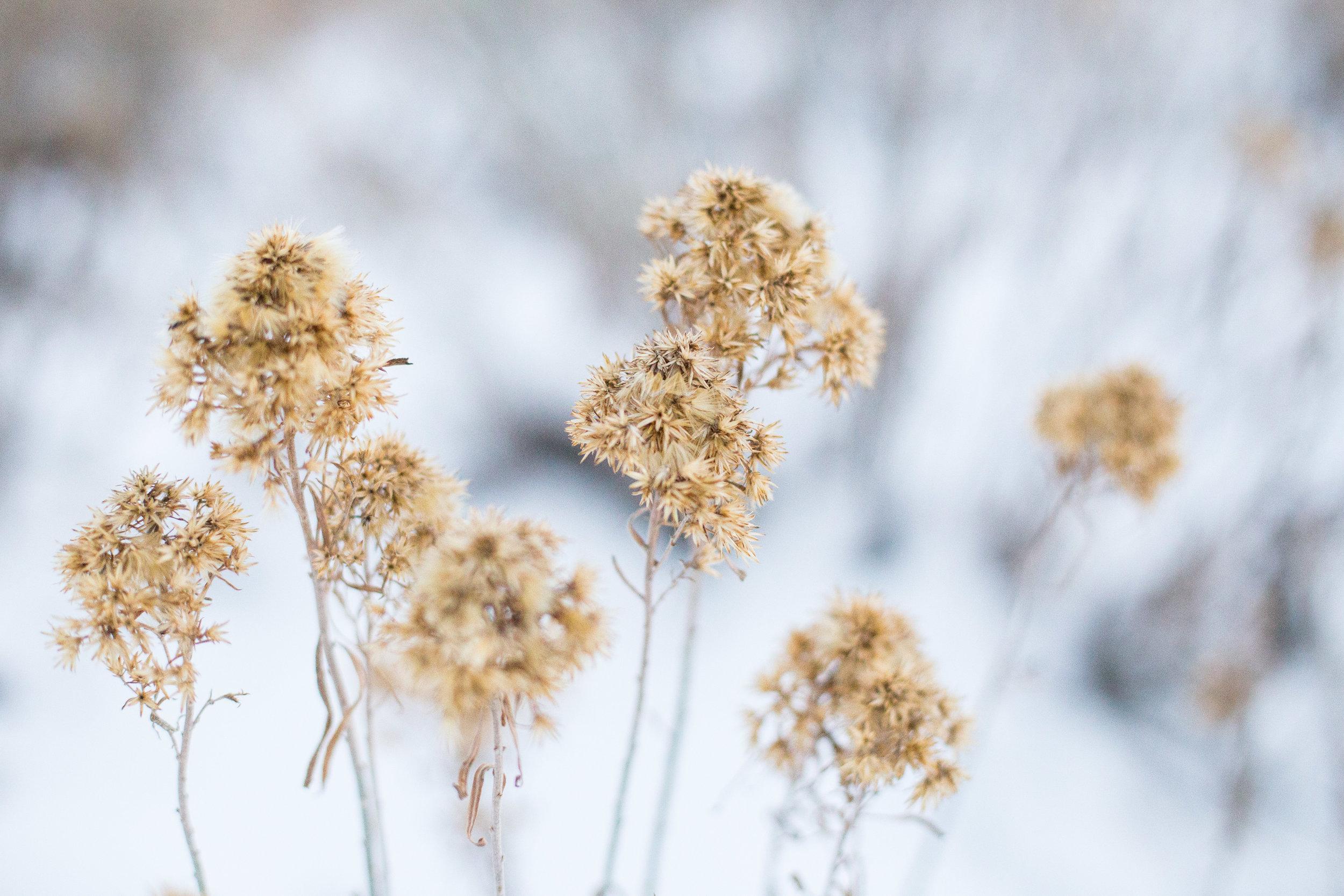 newyearsflowers-8.jpg
