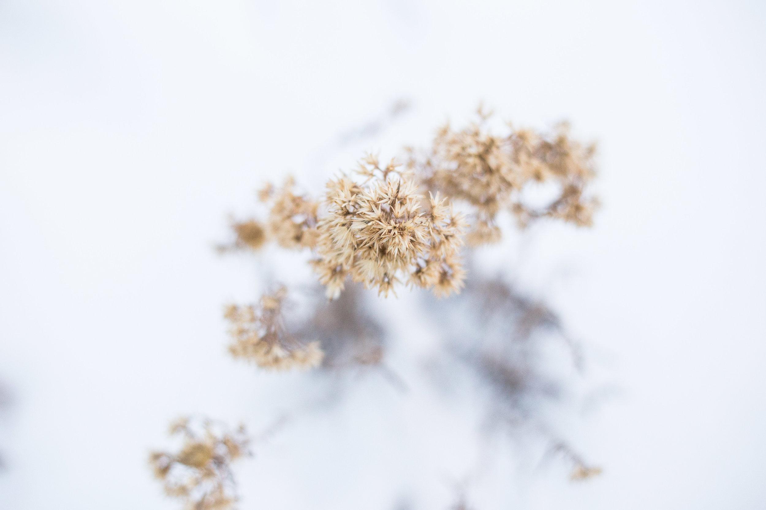 newyearsflowers-4.jpg