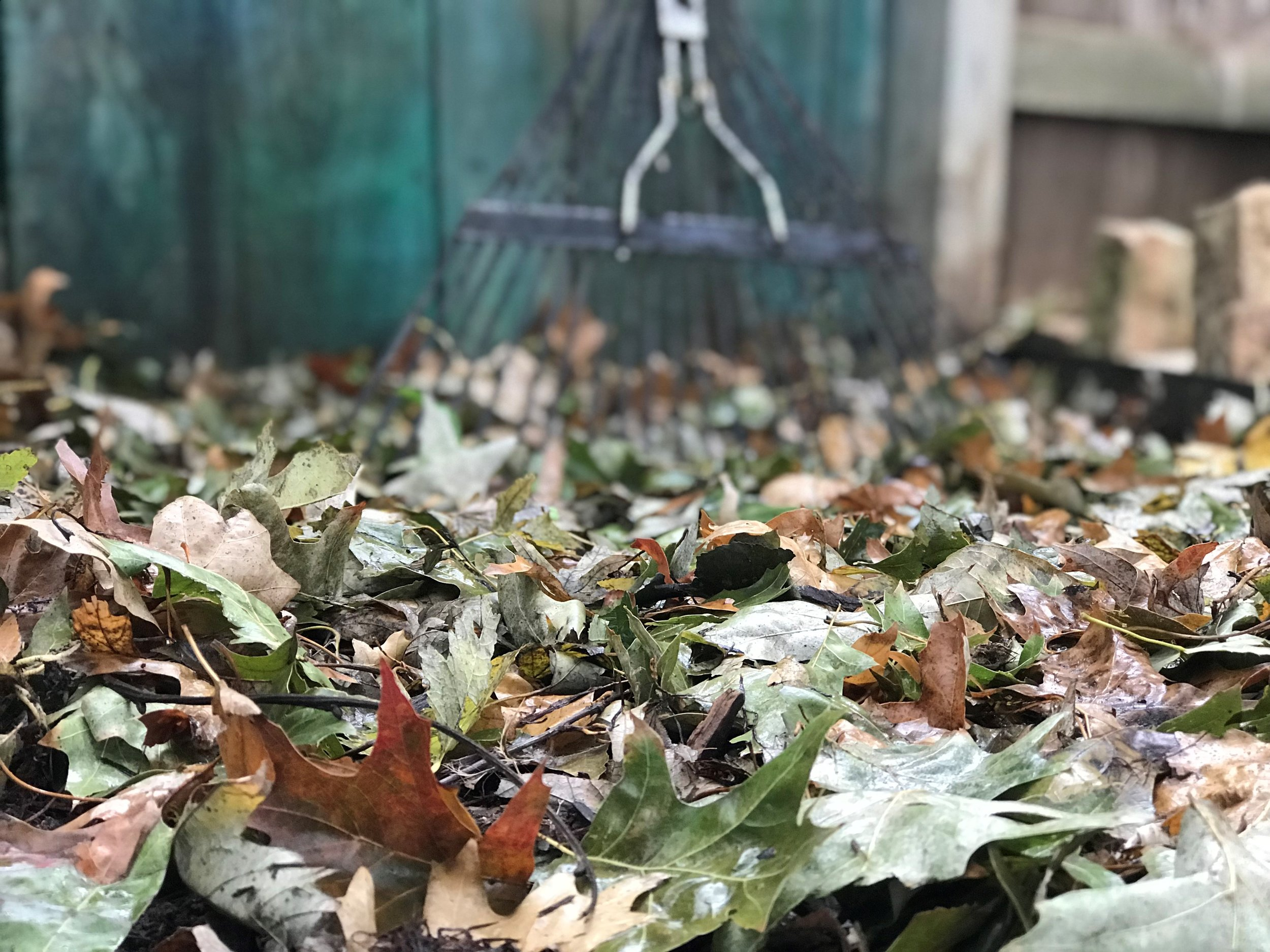 Mulch - The leaves are falling and frosty nights are cooling the soil. Whether you prefer Cedar Bark, Shredded Native Tree Trimmings, Straw or Shredded Leaf Debris, now is a great time to put your plants to bed and protect and improve your soil, with a new top-dressing blanket of mulch.Leaf debris as mulch: To improve landscape beds and garden soil, rake or blow the leaves onto the driveway, then run your mower over them to chop the leaves in a shredded material, creating a high quality, top dress, leaf mulch. Plant and soil health is greatly improved utilizing Mother Nature's fertilizer.Mulch Benefits: * Insulates the soil helping to provide a buffer from heat and cold temperatures. * Retains soil moisture in both summer and winter. * Keeps weeds out preventing unwanted competition. * Prevents soil compaction. * Improves your soil by adding beneficial organic matter as the material breaks down.