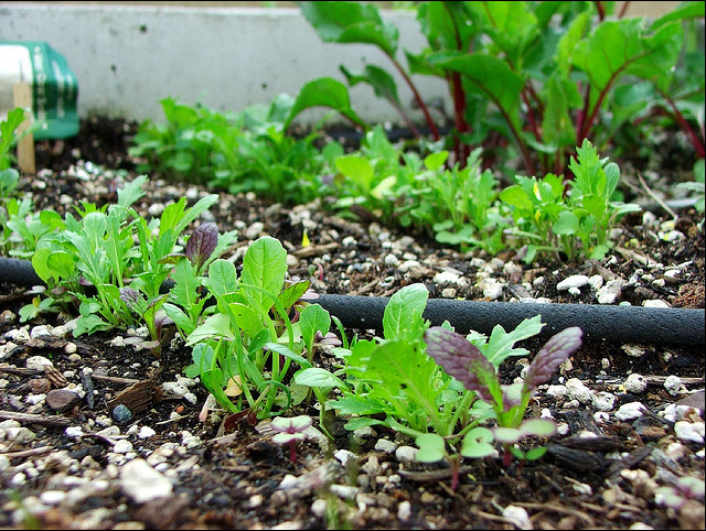 Garden pic.PNG