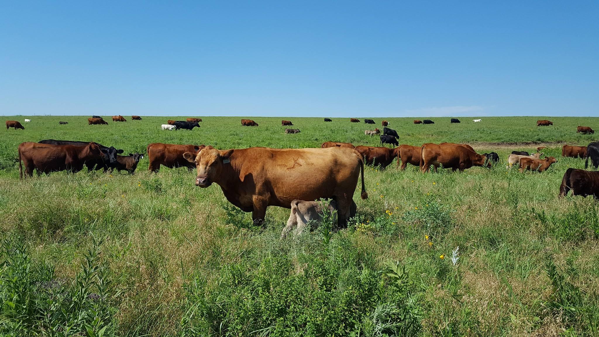 Graze the Prairie