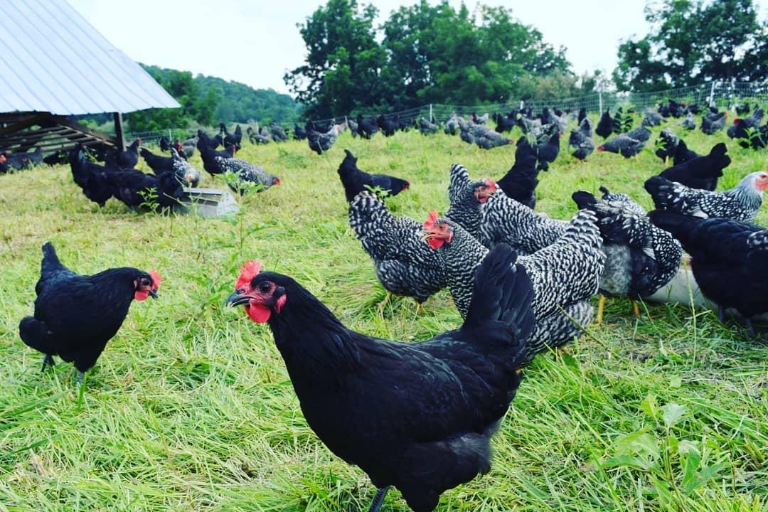 Polyface Farms