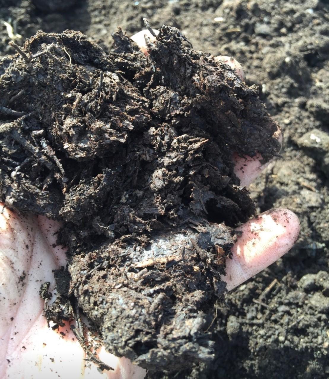 compost hand 2.jpg