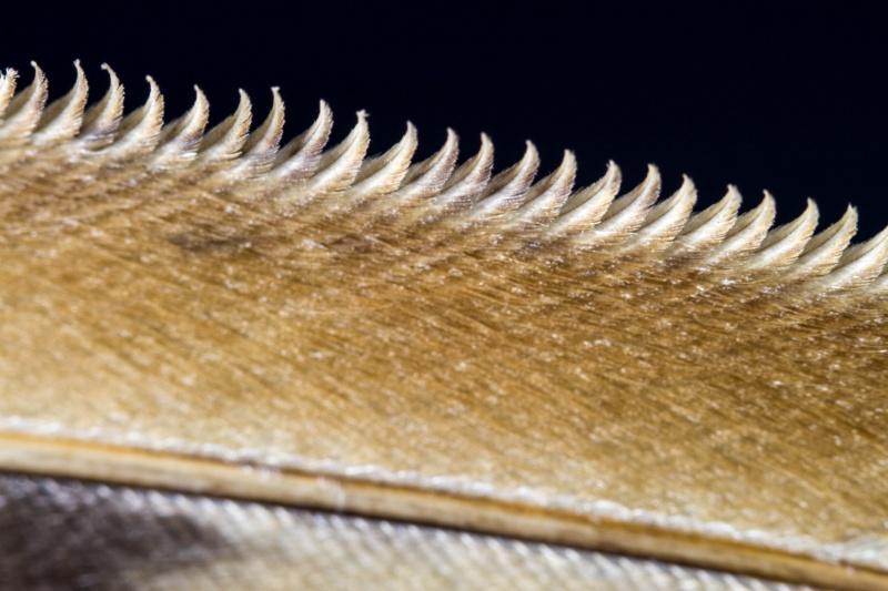 feather_barn_owl_kay_schultz.jpg