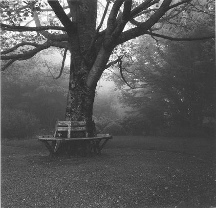 Tester-Foggy Afternoon-1.jpeg