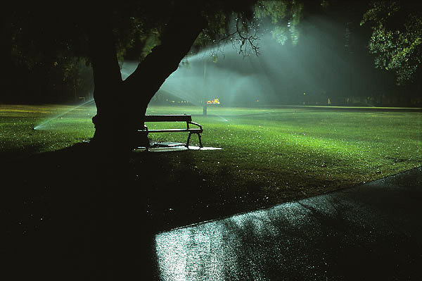 Nocturnal - Watering Rymill Park Adelaide.jpg