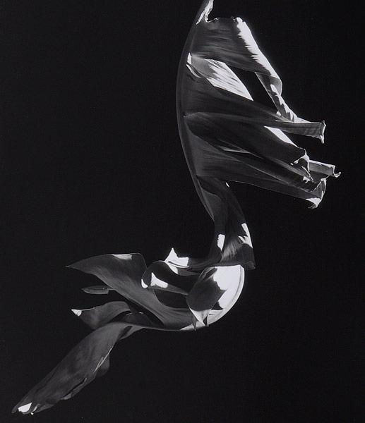 Emerge - Leafy Sea Dragon.jpg