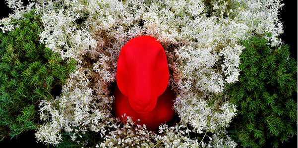 Featured image: CJ Taylor, Rabbit with summer flower cartouche  (detail), pigment print, acrylic glass face mount,70 x 43 (oval)cm.