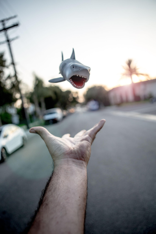 Shark in flight