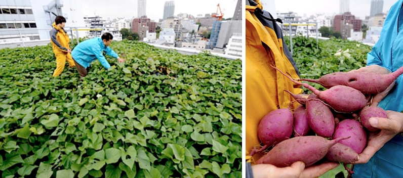 In Tokyo, urban farming is becoming a popular way to not only address food supply and climate issues, but also to provide a new source of employment.  Images via FLH .