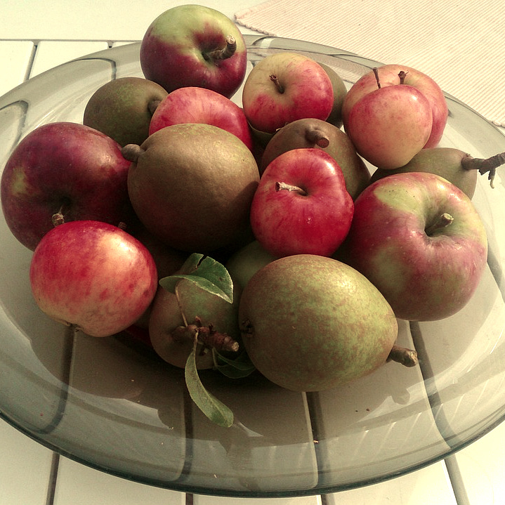 Apples Pears.jpg