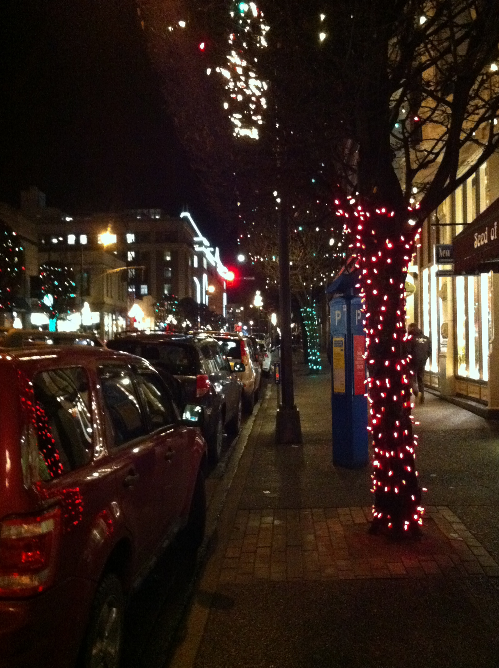shoptwoblooms Christmas Lights.jpg