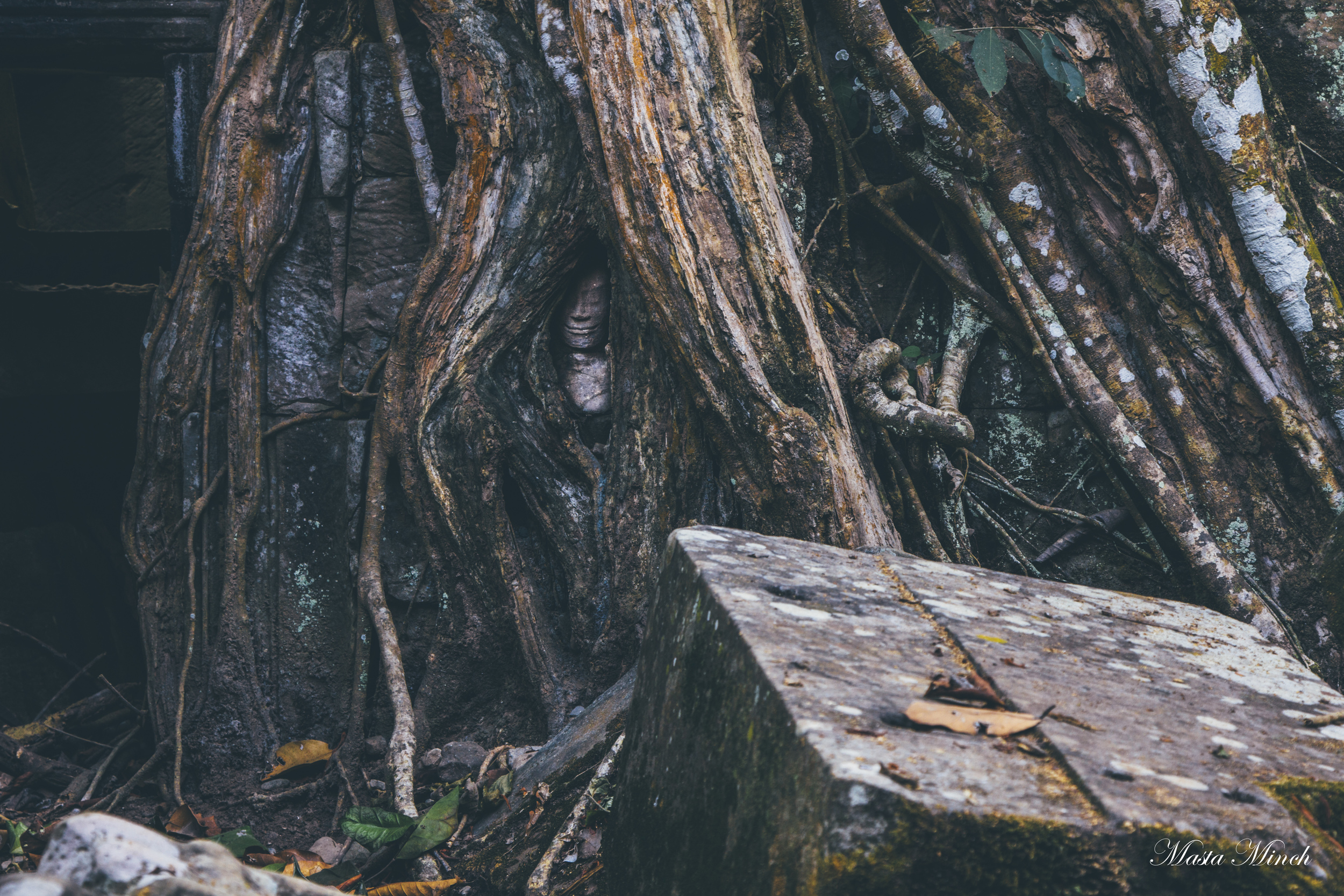 Small head of Buddha peaking through the overgrowth.