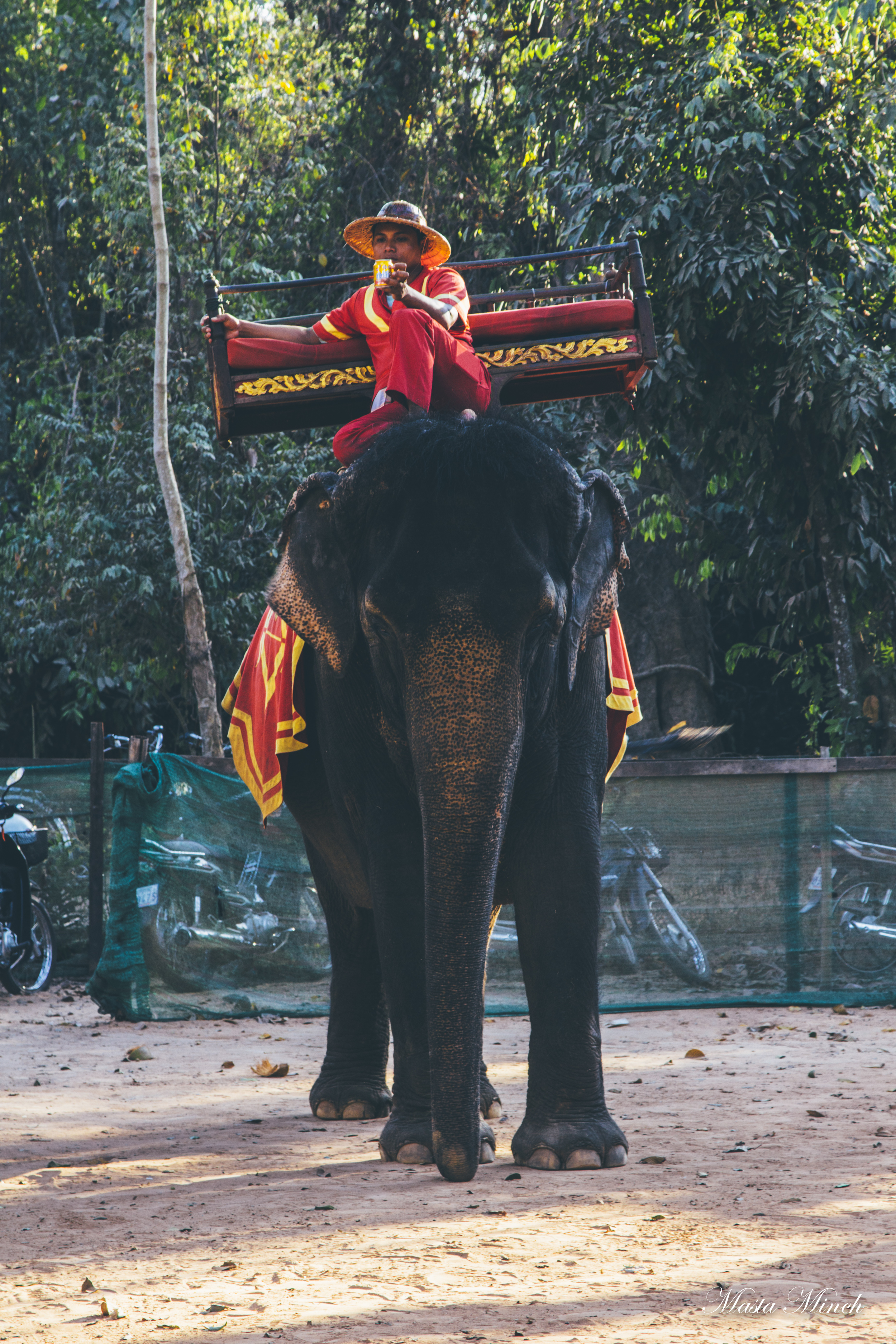 Elephant riding in Angkor Thom for $20. Don't ride elephants with that shit on their backs that's fucked up.