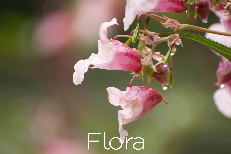 Flora thumb-.jpg