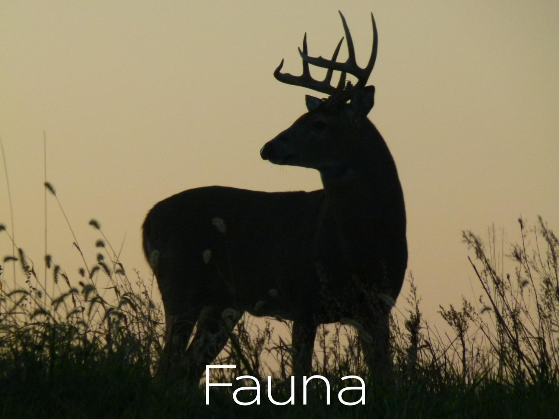 Fauna thumb-.jpg