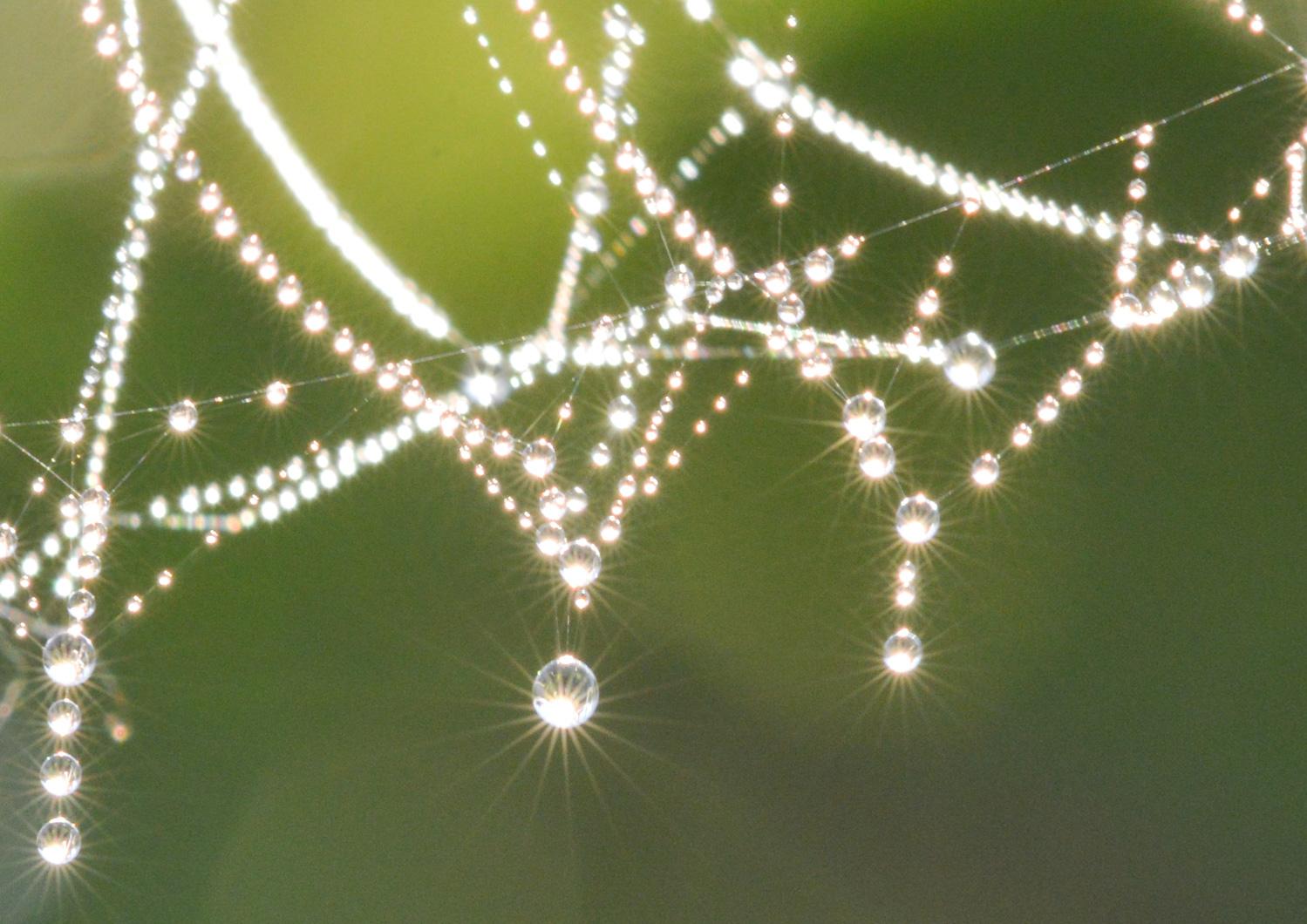 Spiderweb-4871.jpg