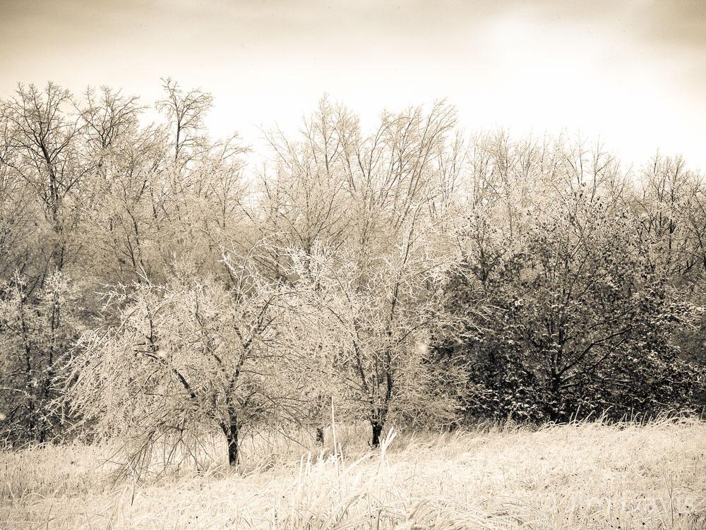 Landscape -12