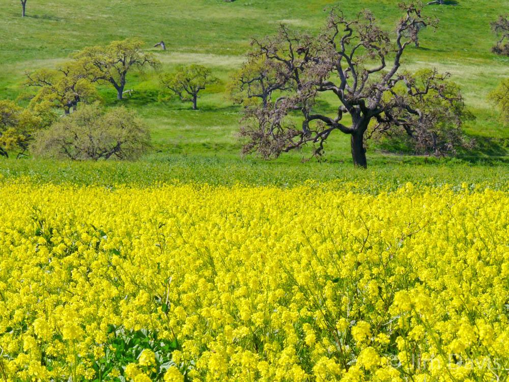 Landscape -1040809