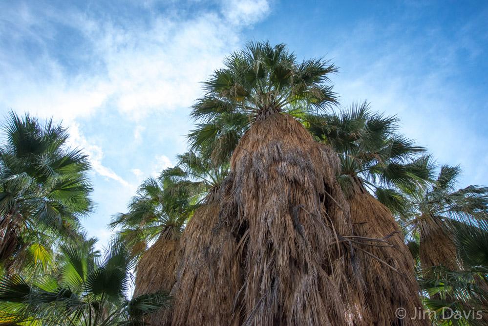 Palms-3788