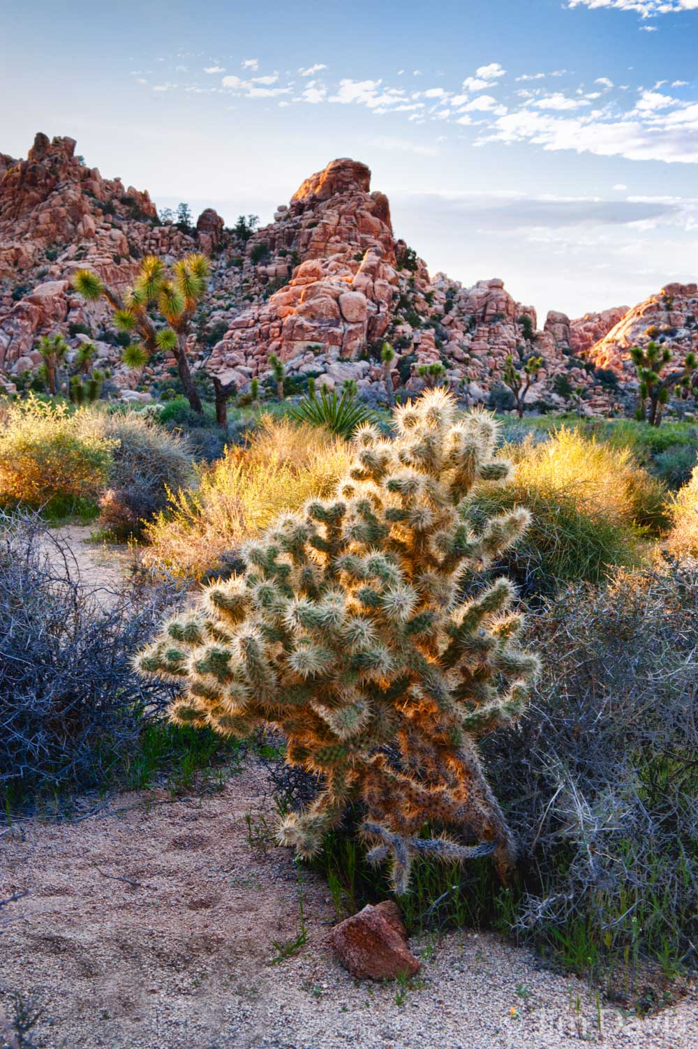 Joshua Tree -1784HDR