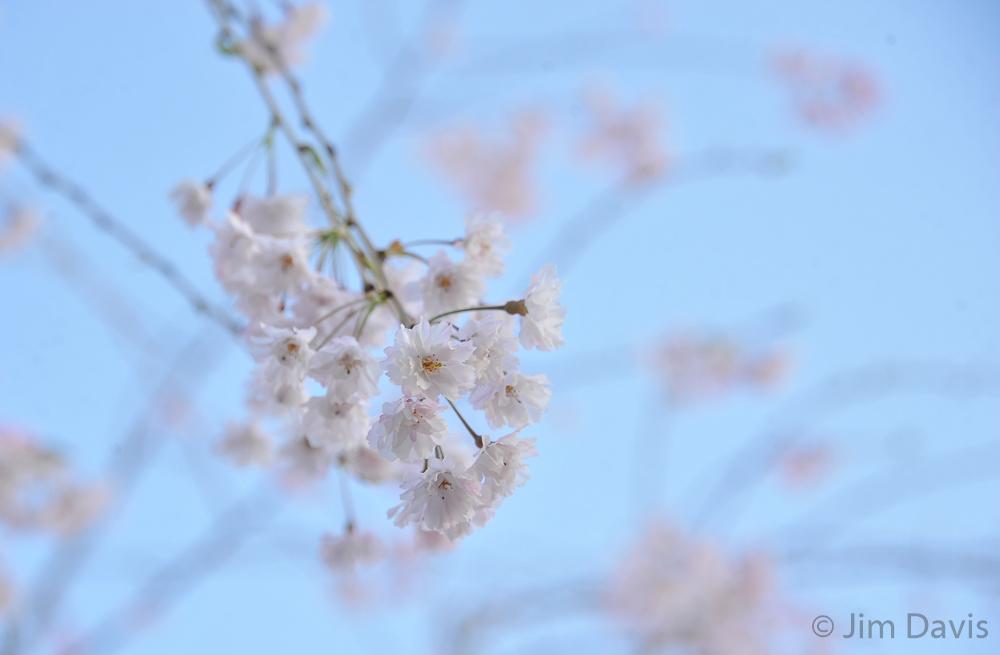 Flora-4660.jpg