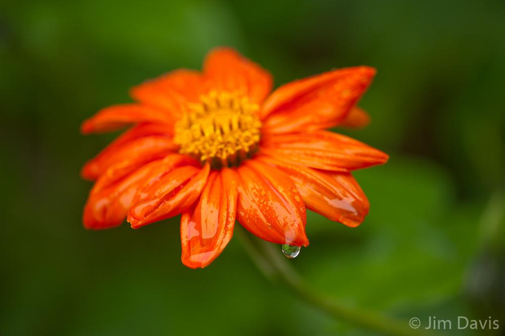 Flora-5993.jpg