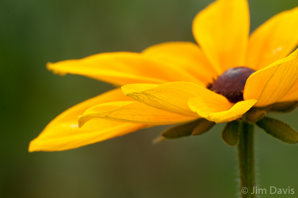 Flora-6428.jpg