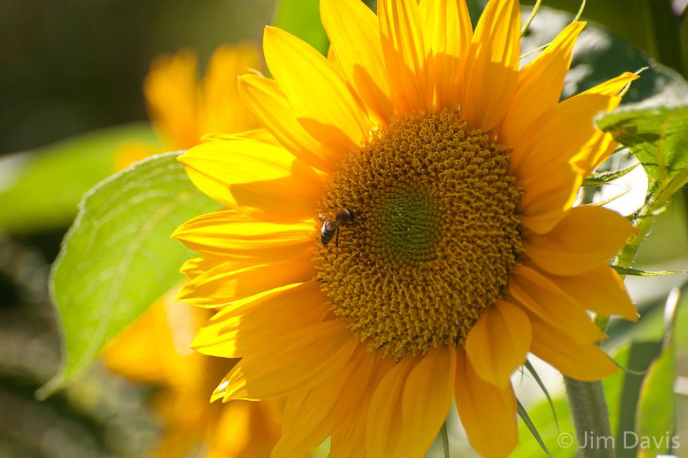Flora-6926.jpg