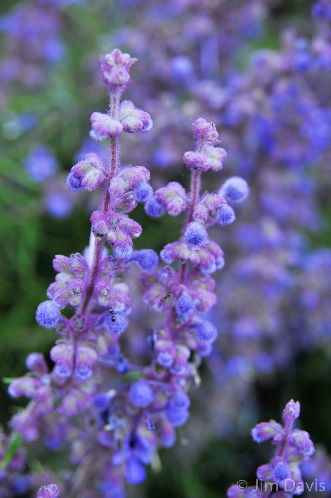 Flora-7390.jpg