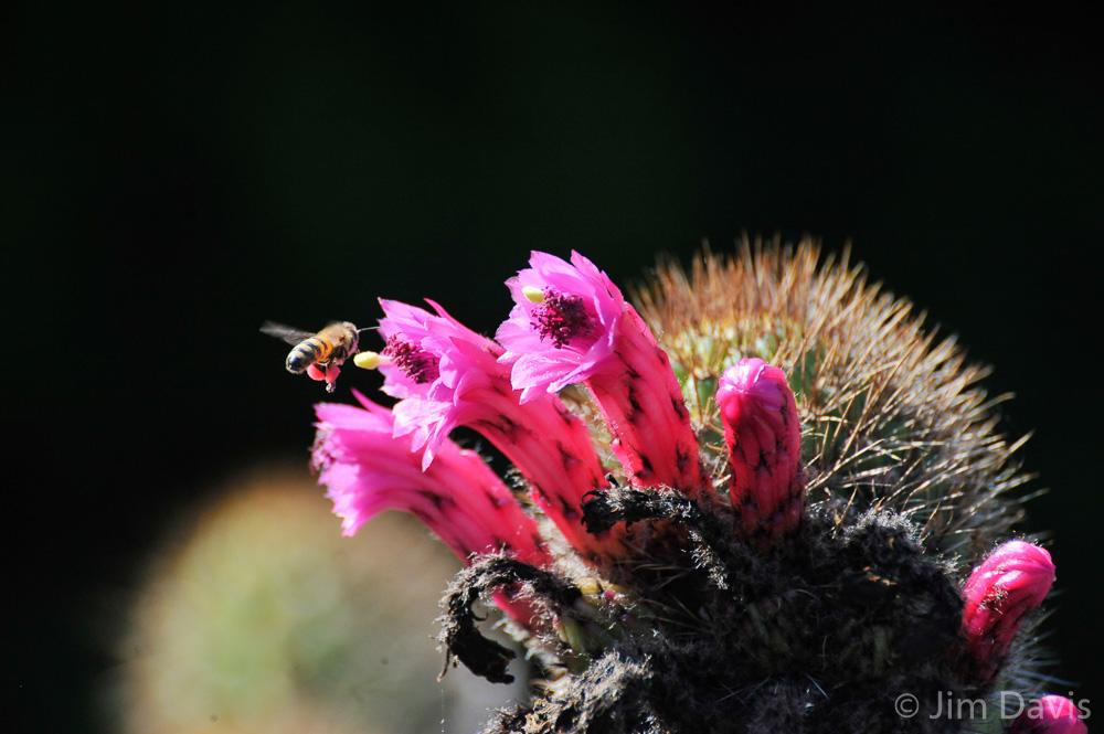 Flora-7766.jpg